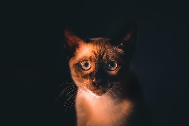 karma dla kota Caniwild
